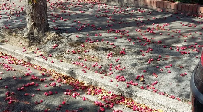 Tweet The mess from fallen crab apples in St Cadoc Rd is…